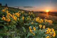 8. Sunrise over Wildflowers at Waterton Lakes National Park, Alberta